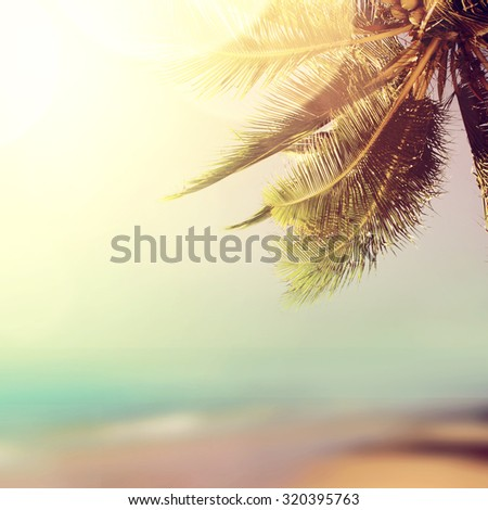 Coconut palm tree over the sunny blurry beach. Tropical beach landscape with blurry ocean, palm leaves, sunshine and sandy beach. Paradise design banner background with booked and vintage effect.