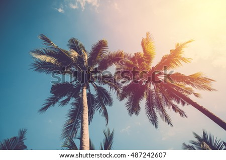 Coconut tree and blue sky. Vintage filter
