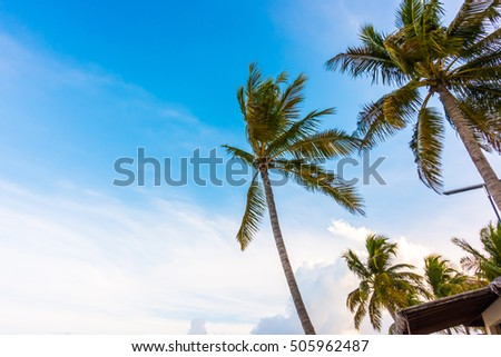 Coconut tree over  blue sky