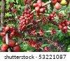Coffee - fruits - stock photo