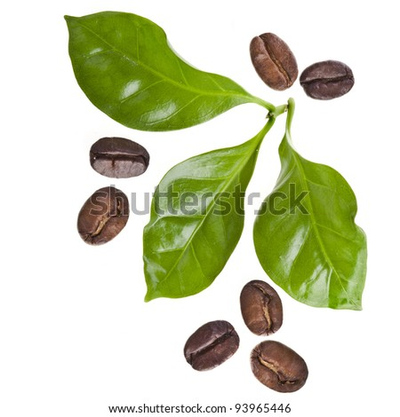 coffee grains and leaves of coffee trees surface top view sign close up  isolated on white