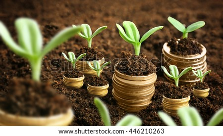 Coins in soil with young plants. Money growth concept.
