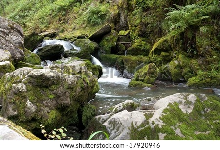 Cold and clear water stream in the mountain forest.