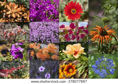 Collage from flowers of the island of eternal spring - Madeira.