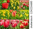 Collage from nine spring tulip flower images - stock photo