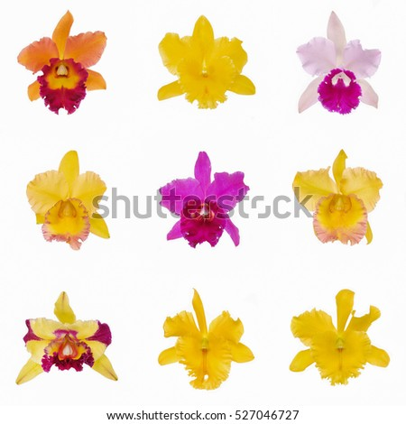 Collage of colorful cattleya Orchids