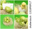 Collage of Easter eggs on green background on Holiday theme/Set of photos on Easter theme - stock photo