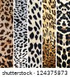 Collage of leopard textures - stock vector