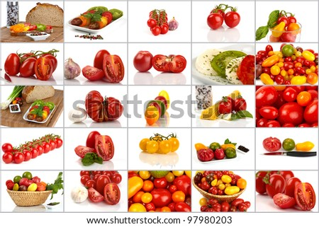 Collage of many different varieties of organic tomatoes