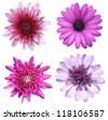 collage of purple flowers - stock photo