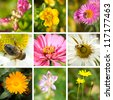 Collage of summer flowers - stock photo