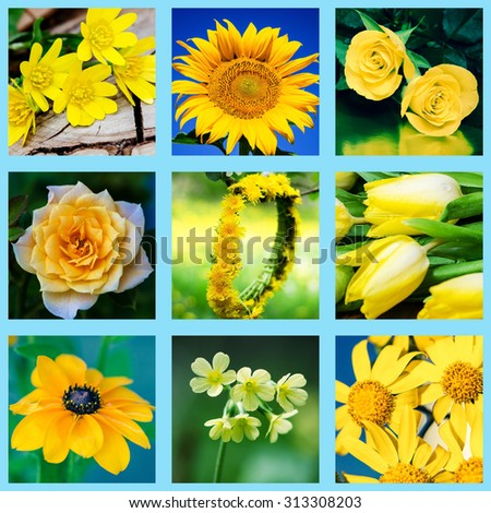 collage of various yellow flowers