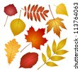 collection beautiful colourful autumn leaves isolated on white background. - stock vector