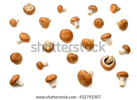 Collection champignon isolated on white background