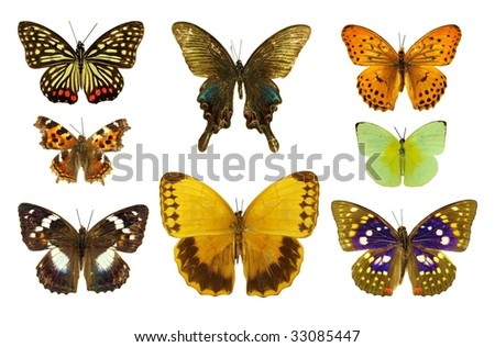 collection of eight isolated butterflies