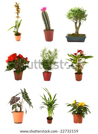 Collection of isolated flowers in a pot