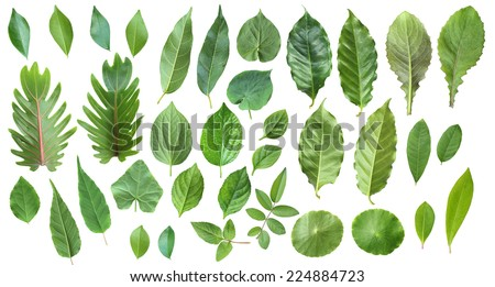 Collection of leaves isolated on a white background