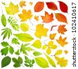 collection of leaves isolated on white background - stock photo