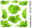 Collection of Lettuce salad isolated on white background - stock photo