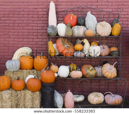 collection of pumpkins and gourds on a metal rack against a brick wall