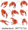collection of red crawfish lobster isolated on white background - stock photo