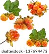 Collection set of cloudberry close up isolated on white background - stock photo