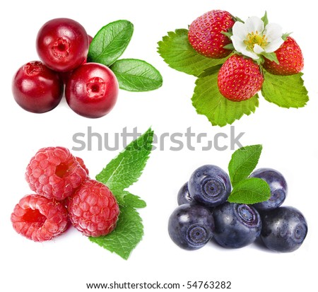 collection set of forest whole berries closeup macro isolated on a white background