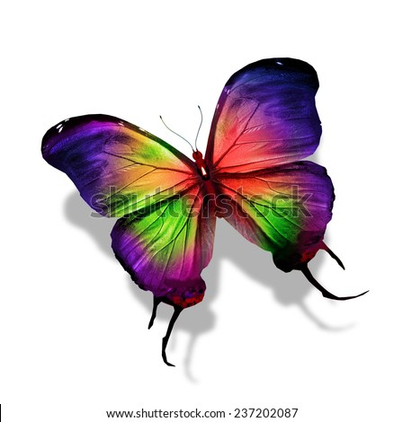 colorful butterfly isolated on white stockillustration 121982695 shutterstock. Black Bedroom Furniture Sets. Home Design Ideas