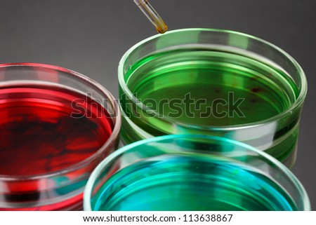 color liquid in petri dishes on grey background