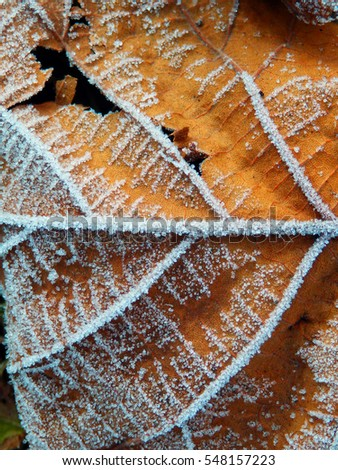color macro photography of dry frozen leaf