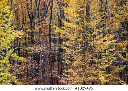 Color patterns in autumn forest