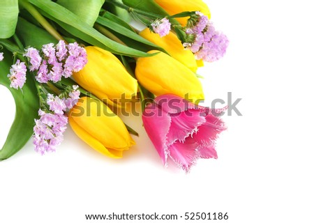 Colored yellow and violet spring tulips on white background