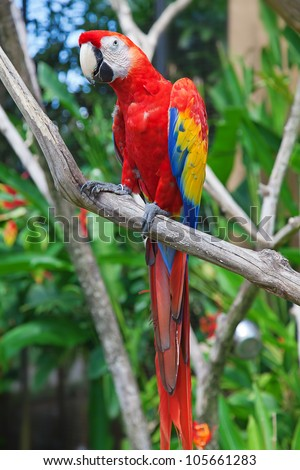 Colorful ara parrot on the tree