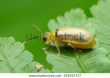 colorful Beetle standing on leaf