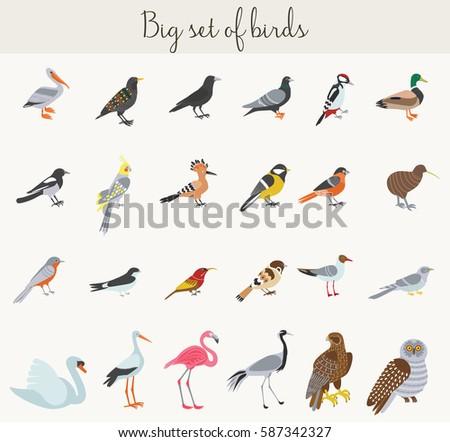 Big Set Birds Flying Animals Bird 363361373