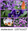 Colorful collage of beautiful purple and orange flowers (includes campanula bellflowers, a torch lily or 'red hot poker', pansies, violas, and chives) taken outdoors in natural setting. - stock photo