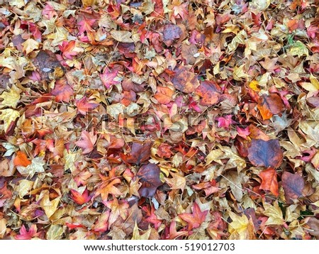 Colorful damp fall leaves on the ground in a forest