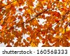 Colorful fall leaves background texture pattern - stock photo