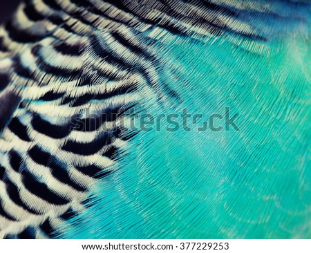 Colorful feathers, budgie bird feathers background texture