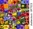 Colorful Floral Collage - Flower Collection - SEE MORE IN MY GALLERY - stock photo