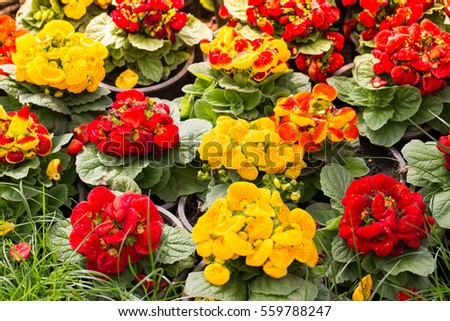 Vivid Color Roses Background Stock Photo Shutterstock - Colorful flower garden background