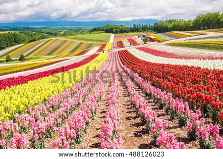 Colorful flower garden on the hill at Hokkaido, Japan