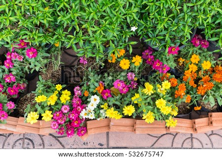 Colorful flowers blooming in the garden