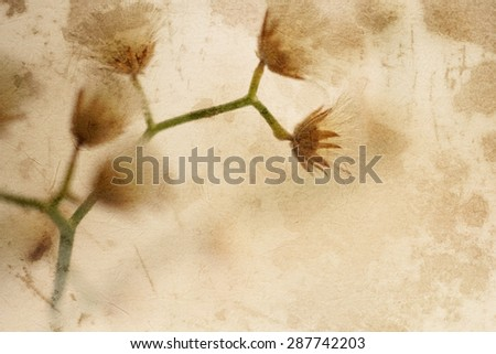 colorful flowers in vintage color style on mulberry paper texture for background