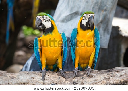 Colorful macaws