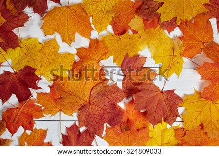 Colorful maple leaves on a table in autumn