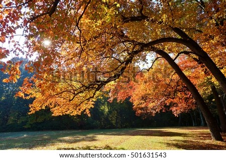 Colorful red, orange, and yellow leaves during foliage season on the East Coast