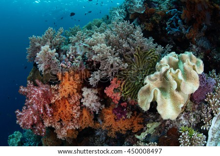 Colorful soft corals grow on a healthy reef in Wakatobi National Park, Indonesia. This remote region harbors spectacular marine biodiversity and is a popular destination for divers and snorkelers.