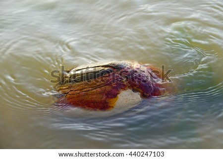 Colorful stone in lake with wave in lake on morning time background,select focus with shallow depth of field:ideal use for background.