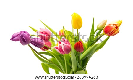 Colorful tulip flowers isolated on white